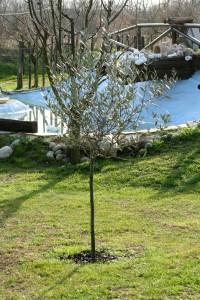 Img 40 Cascina-Bellaria parco